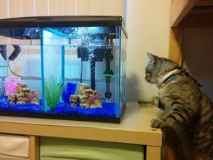 kjj-loves-fish