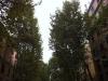 copacii-romei-2