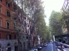 copacii-romei